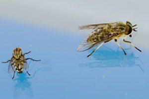 Fliegen bekämpfen