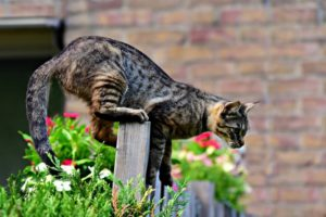 Katzenschreck Test für den Garten
