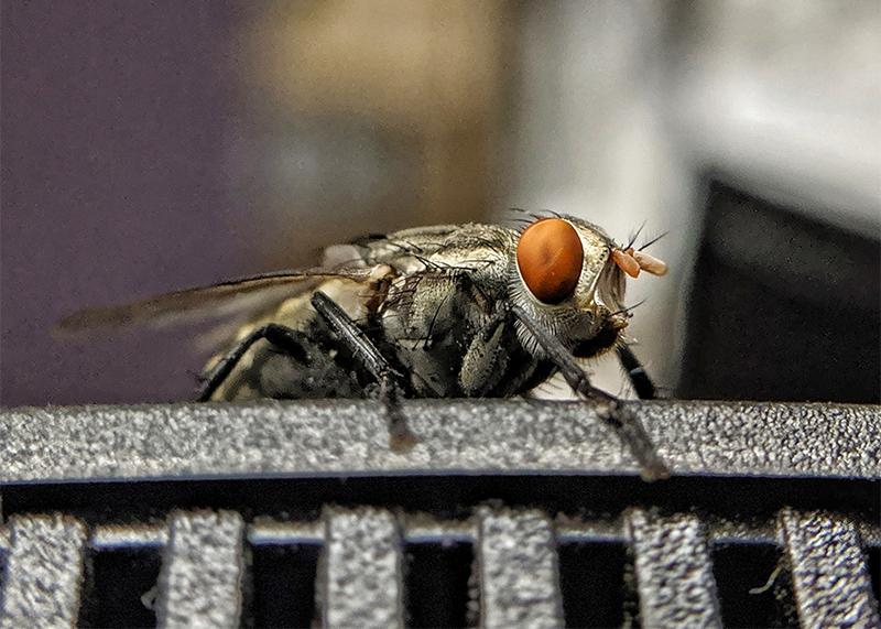Insektenspray kann lästige Fliegen fern halten